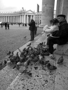 Vatican pigeons